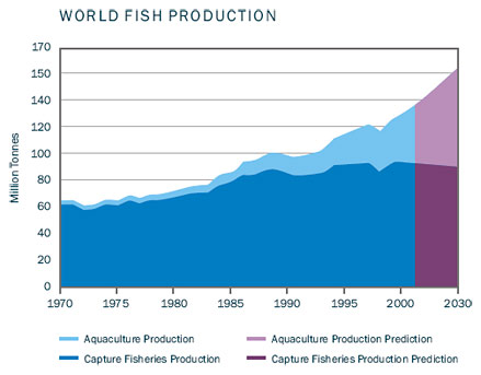 World fish production